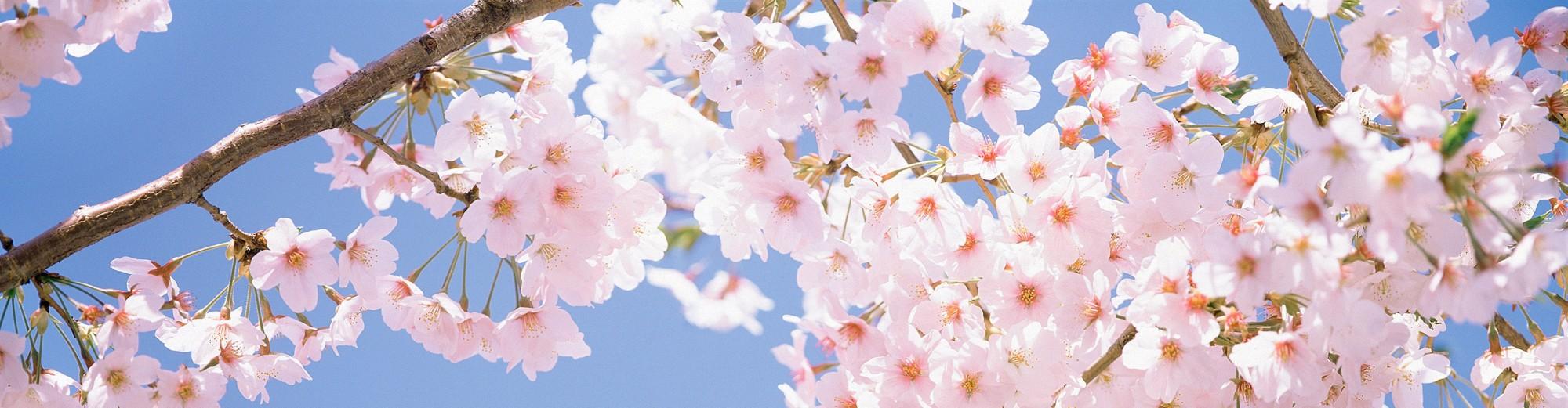 Blossom Class Love To Blog….